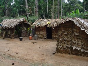 pygmi houses