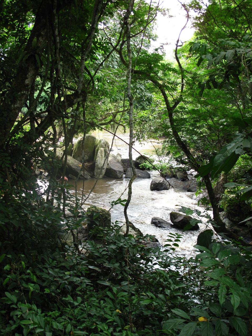 Planet earth congo megan on a mission - Plante jungle ...